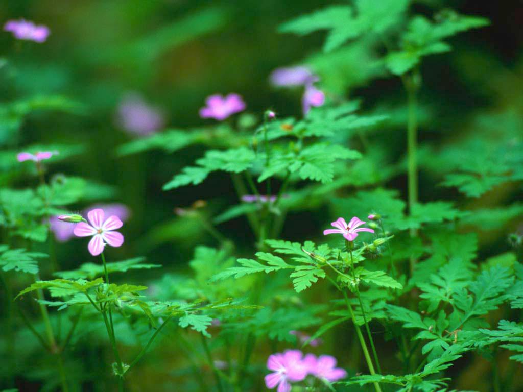 Forest_Flowers.jpg